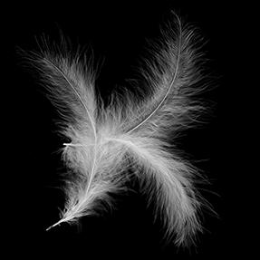 Feathera Font