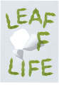Leaf Light tea Font