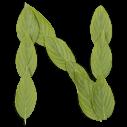 Leaf Light Font