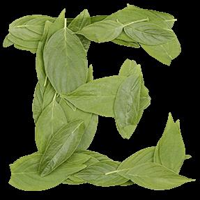 Classical Cooper Leaf Font