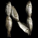 Fish Font