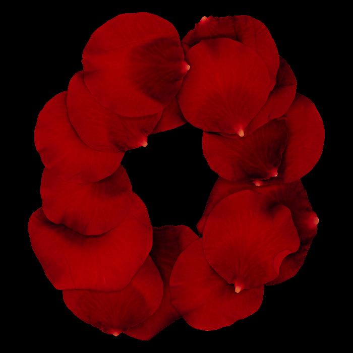 Rose Red Font