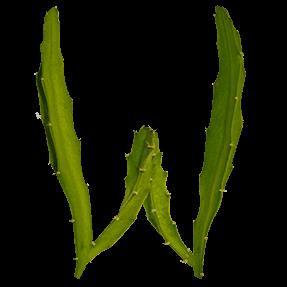 Green Natural Cactus Font