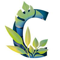 Paper Jungle Font. Letter C