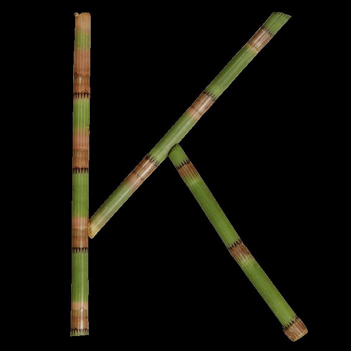 Bamboo Strong Typeface