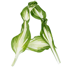 Green Organic Font